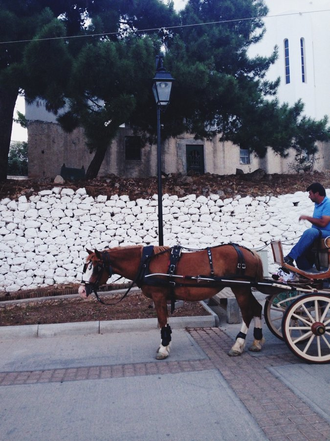 Greek Ponies | My Vacation Guide to Spetses, Greece: The Perfect Affordable Weekend in the Greek Isles