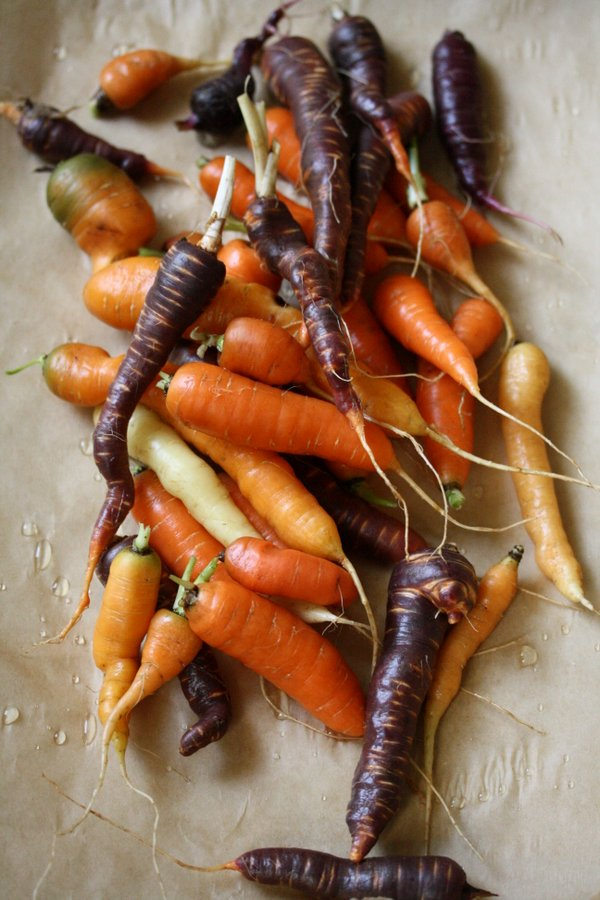 glazed carrots recipe with honey and thyme, roasted in the oven until candied and sweet